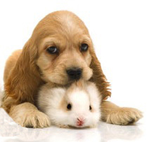Puppy and guinea pig.